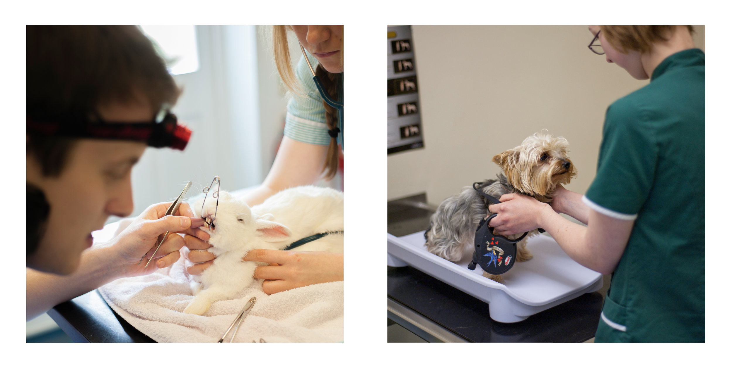 Nick John Lord veterinary photography