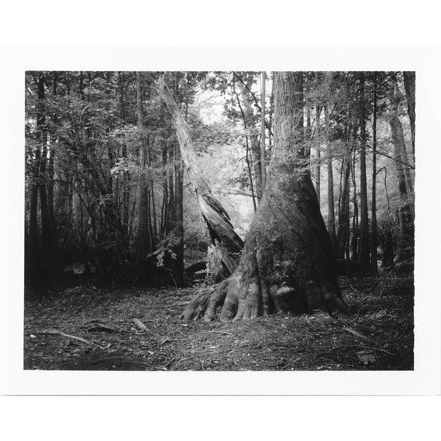twist tree1500.jpg