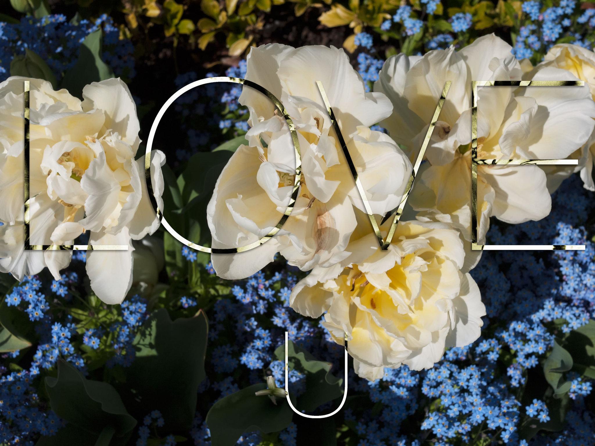 tulips-98.jpg