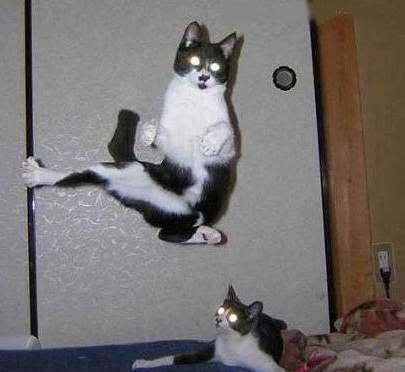 flying_cats.jpg