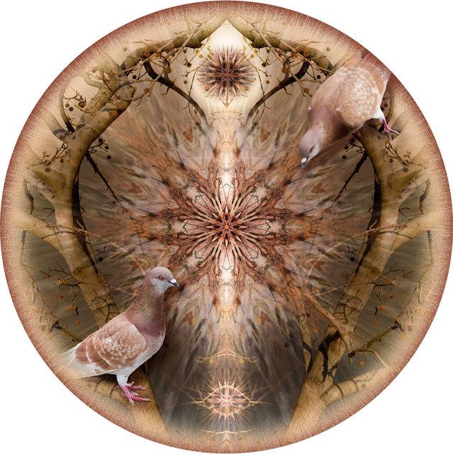 Circle 07 (Doves)