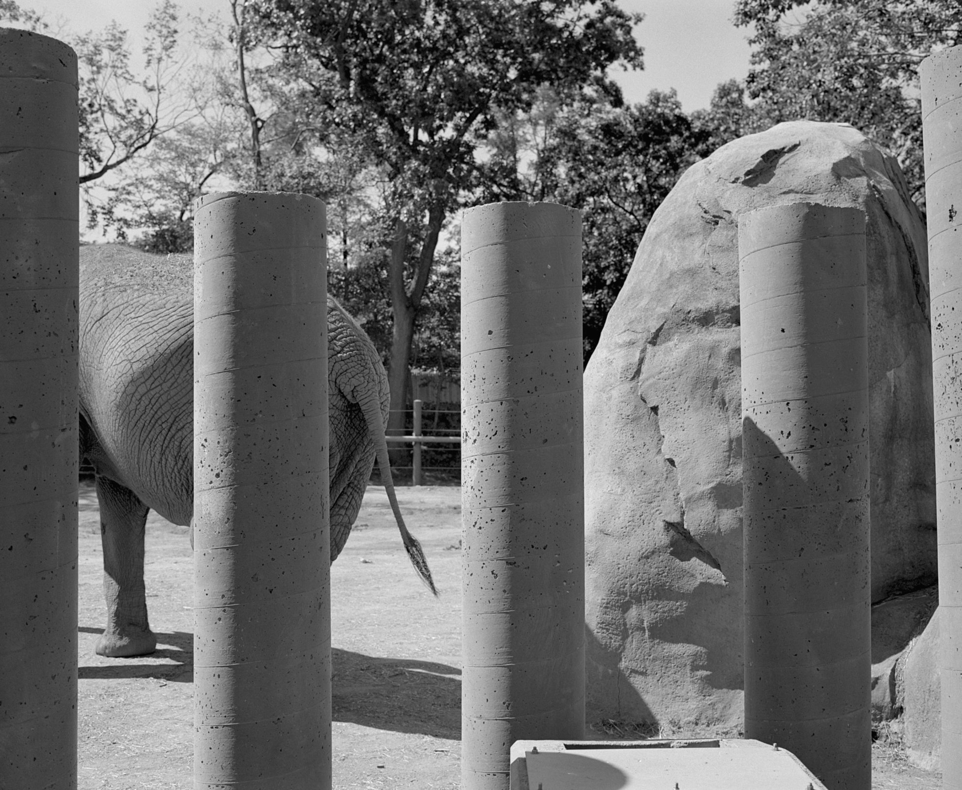 Elephant Forms Series #14.jpg