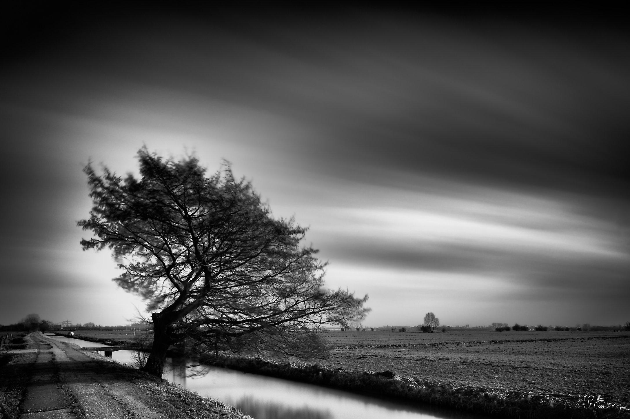 Gevormd door de wind (Rijnenburg polder)