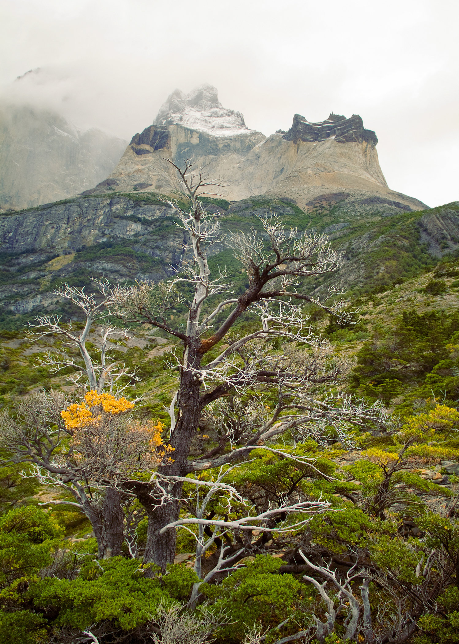 The Horns of Paine