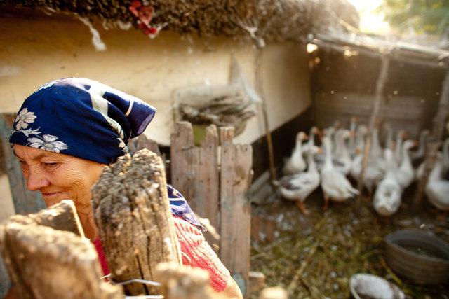 20080815Rumaenien_Vardeni01794frei.jpg