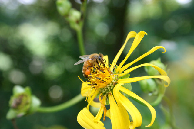 Bees are vital to permaculture health