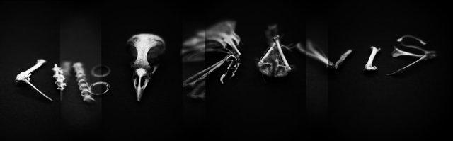 Skeleton, Blue-headed Vireo (<i>Vireo solitarius</i>), Holga 120N, Kodak T-MAX 100, 2015