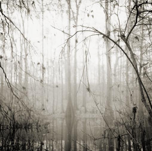 abstract_nature.jpg