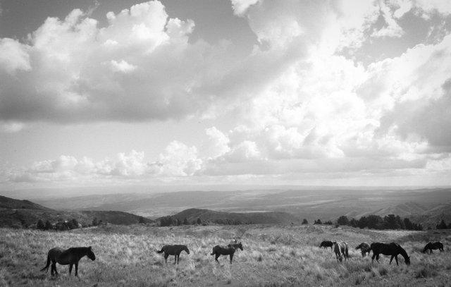 Black & White Horses