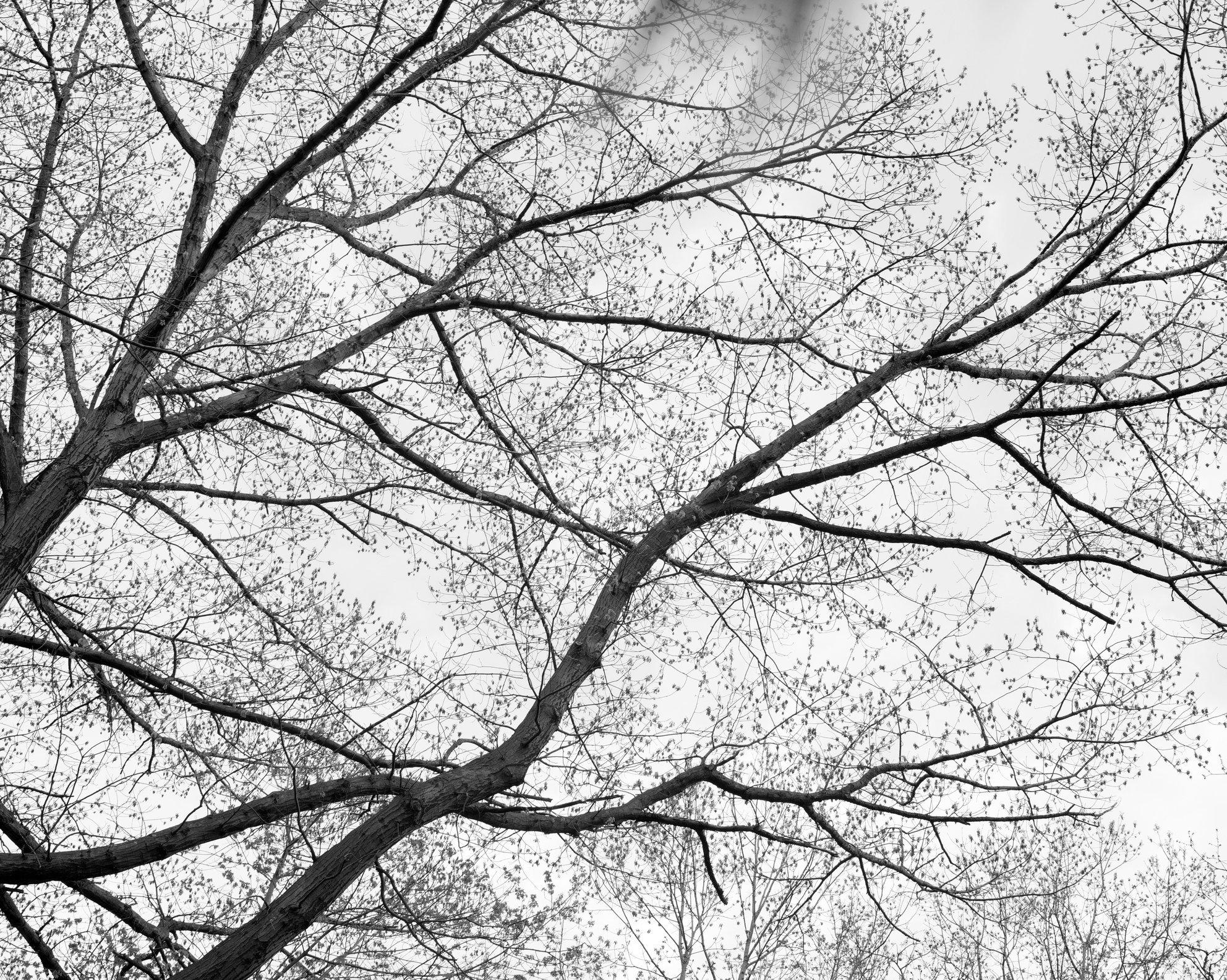 treesblurBW.jpg