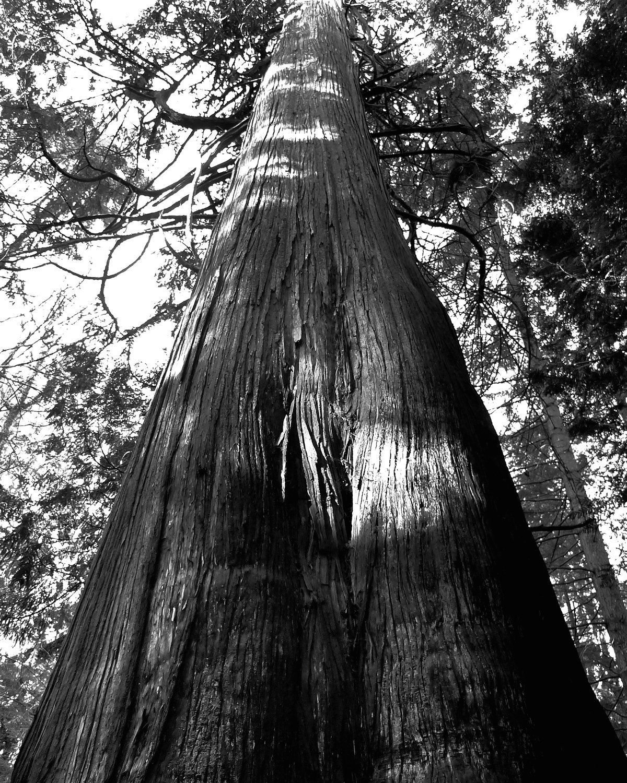 Tree-bw53.jpg