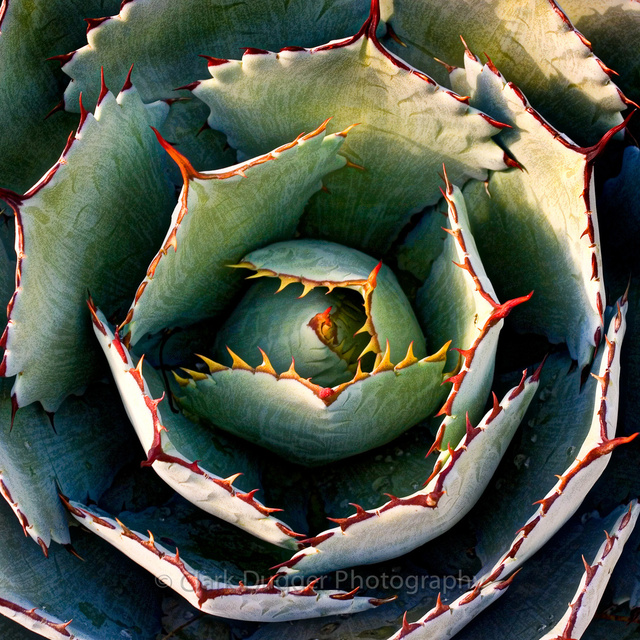 Succulent_4_8x8.jpg
