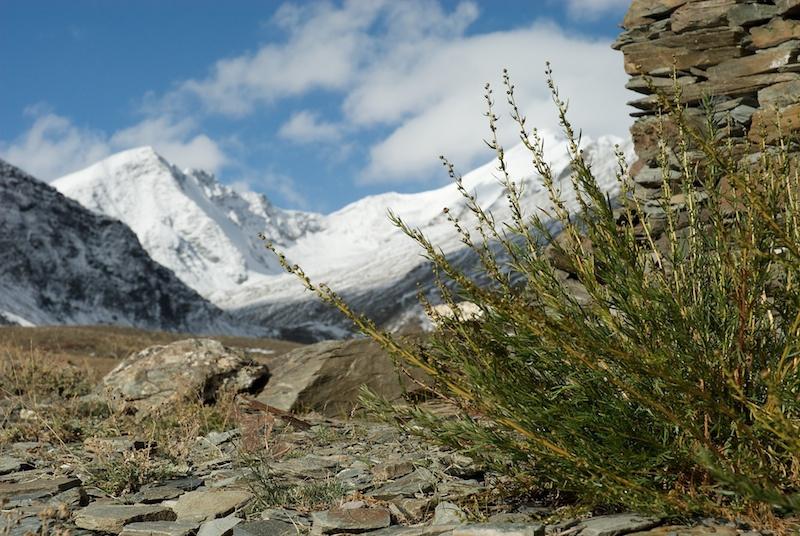 Ladakh_49.jpg