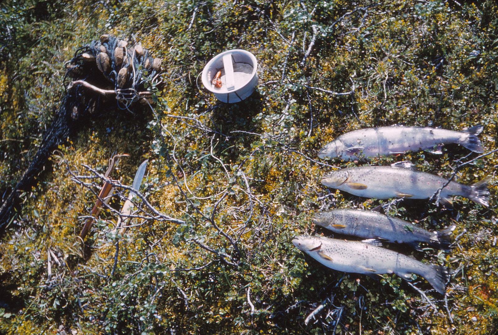 1108 (34) Vissen 1 aug.