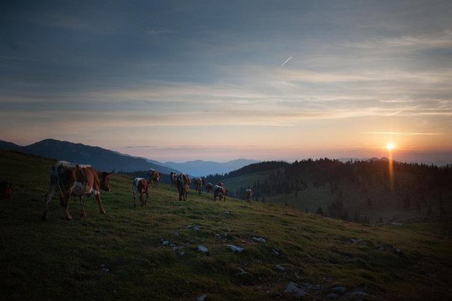 shepherds_007.jpg