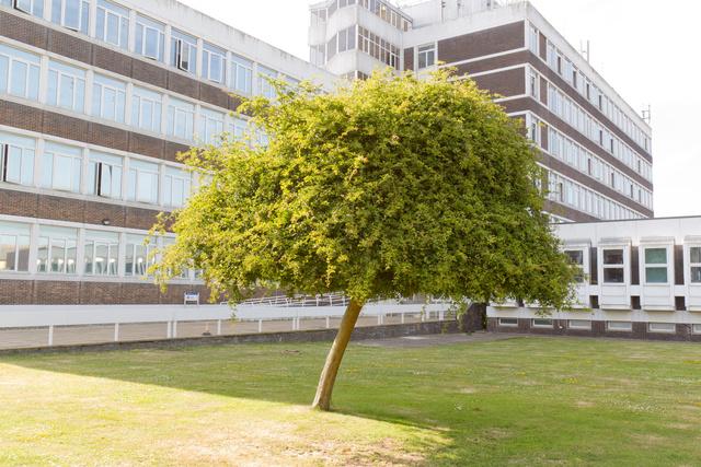 Hawthorn Tree.jpg