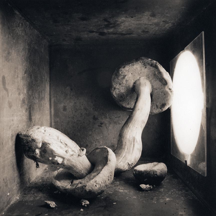 Porcini, c 2000