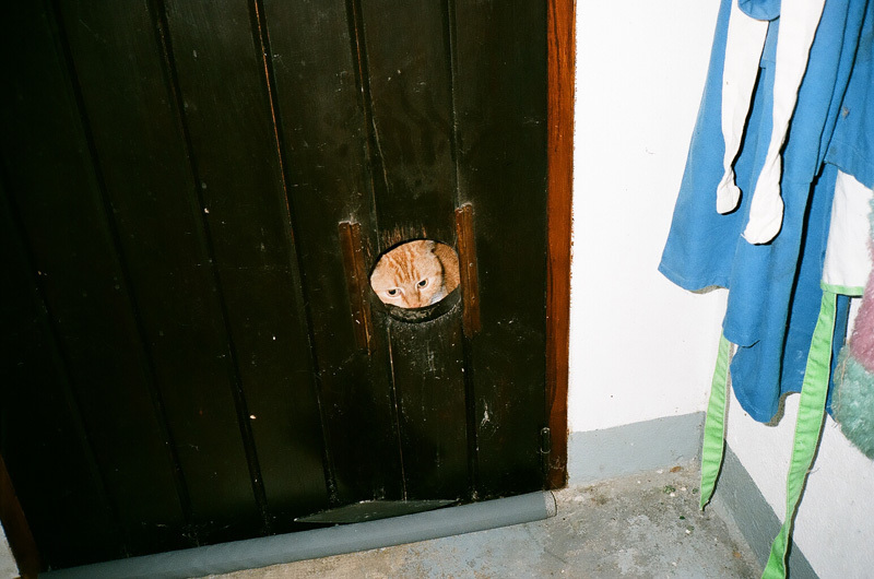 mimosa derrière la porte.jpg