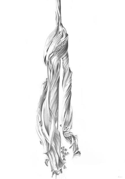 Hibiscus Untitled IV