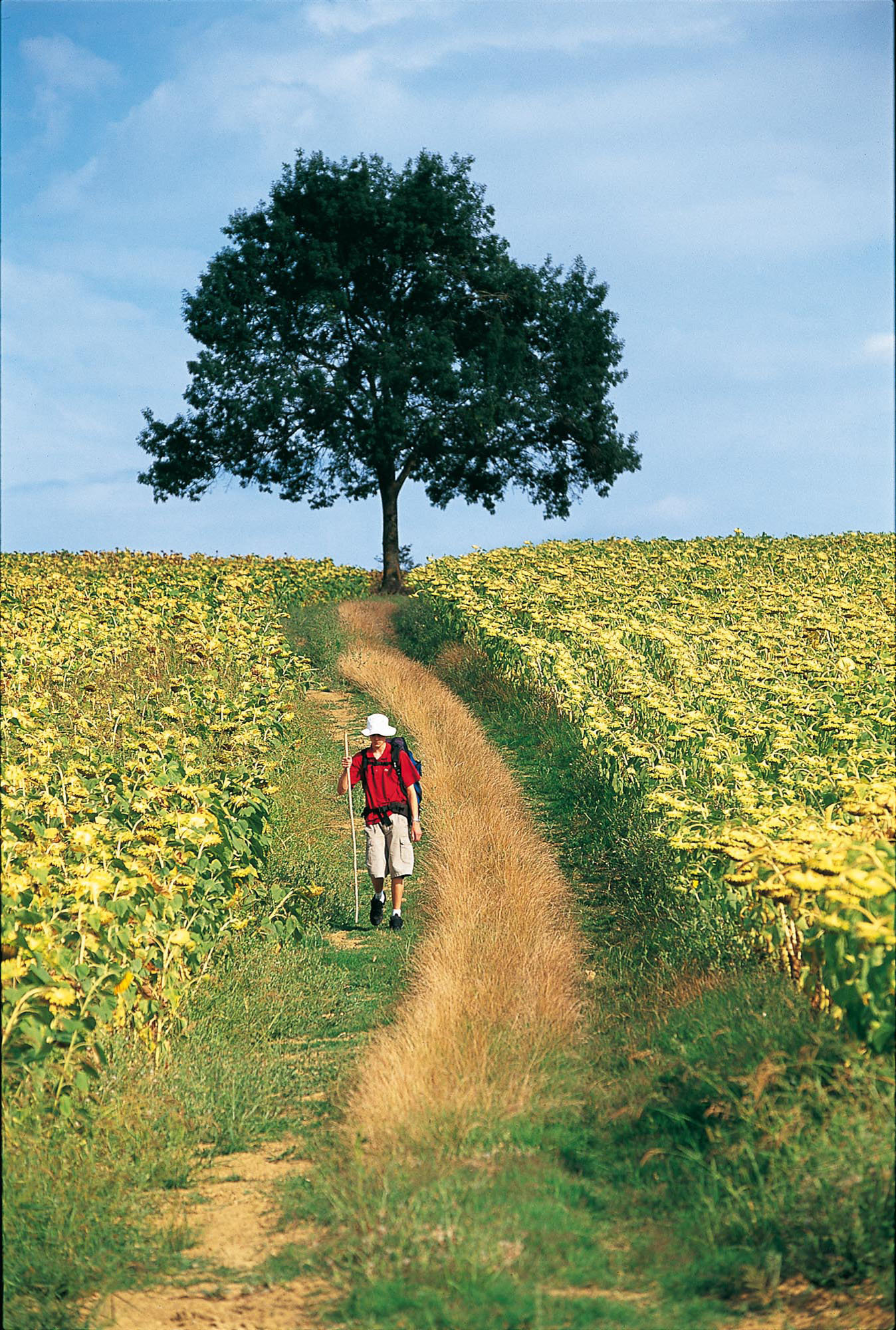 Chemin dans le Gers