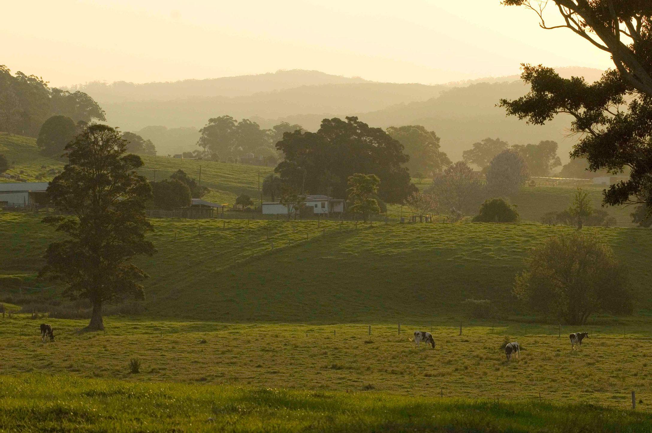 21.farm3493 copy.jpg