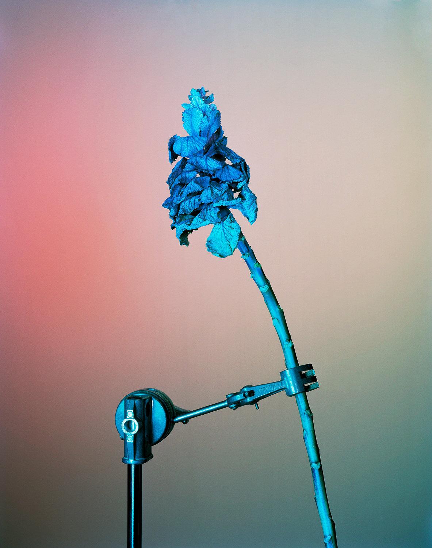 19 Blue Flower in Clamp.jpg