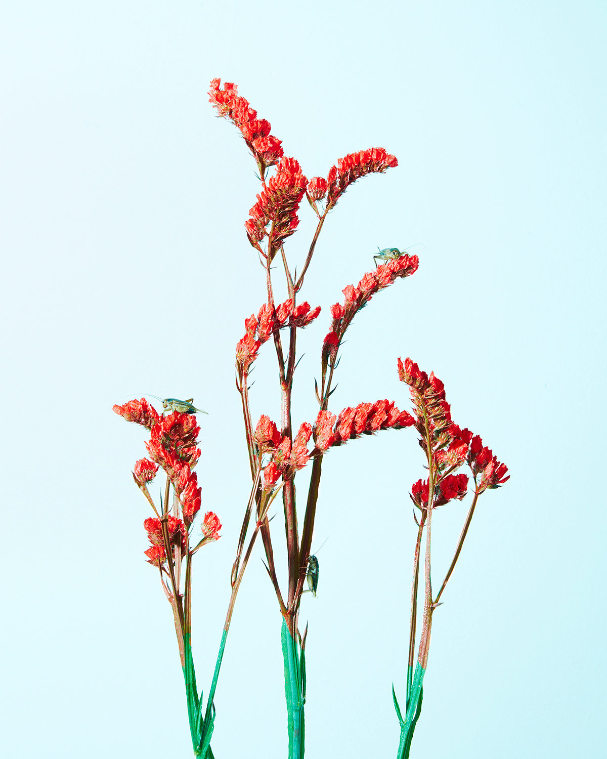 15 Painted Red Flowers with Black Crickets.jpg