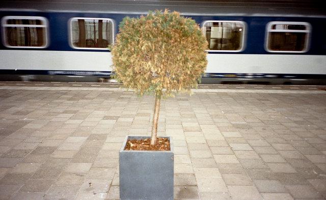 trein amstel.JPG