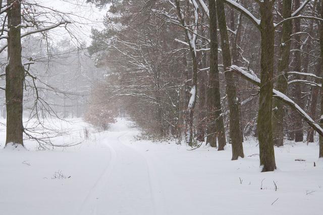 Winterlandschap winter 2009/2010