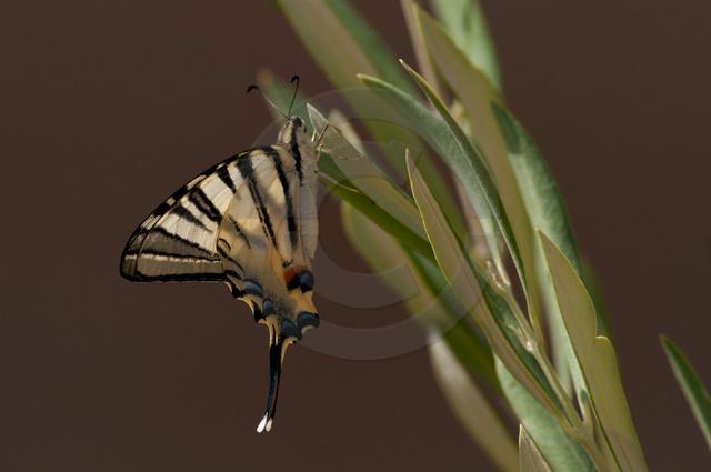 Insekten_Copyright_288.jpg