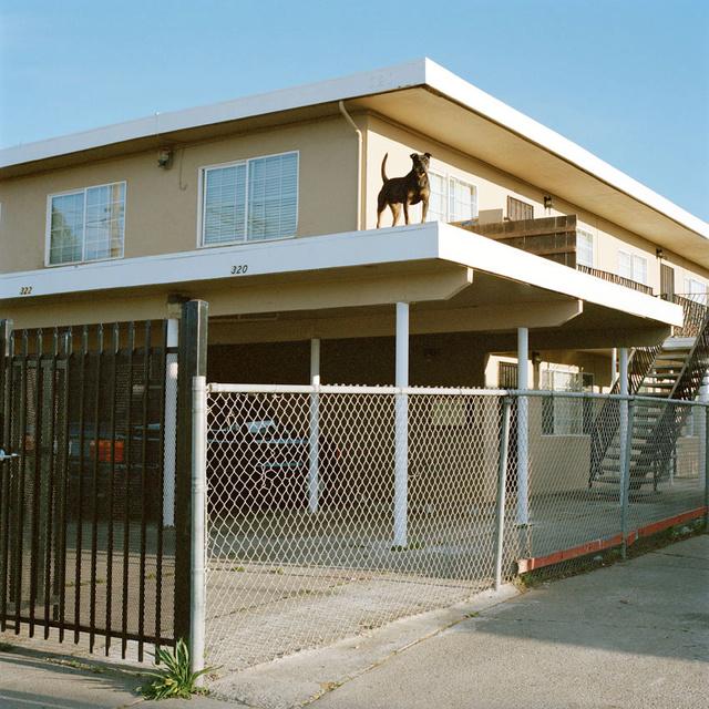 Dog_Roof 2.jpg