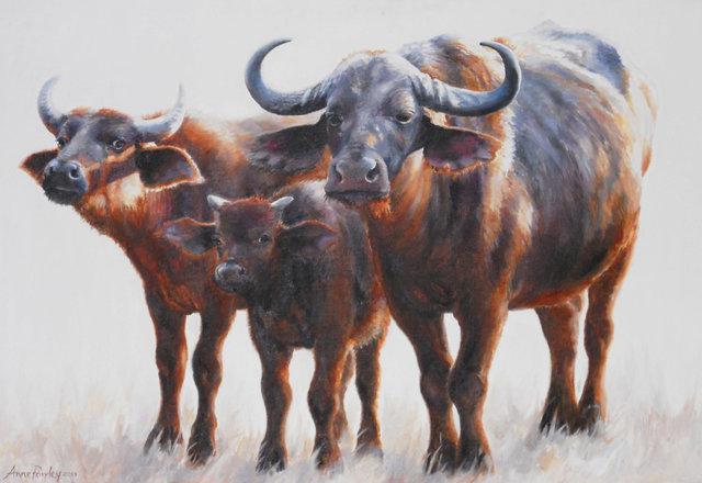 Cattle 2013.jpg