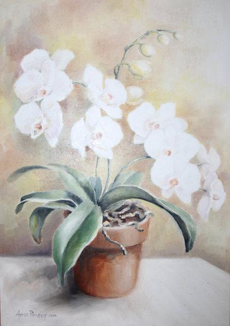Orchid 2010.jpg