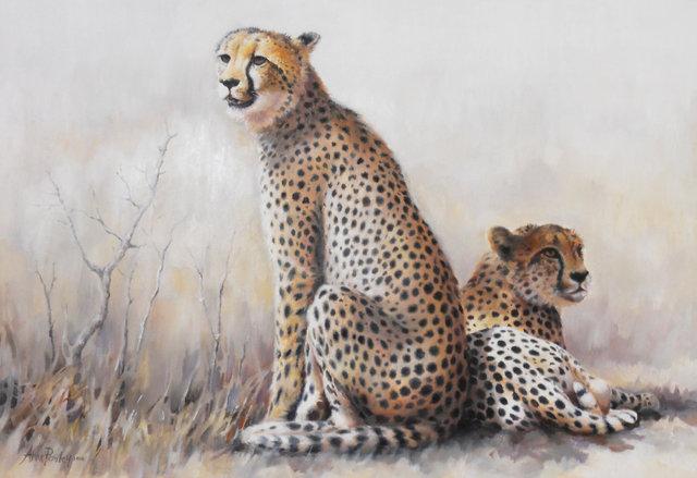 Cheetahs 2014.jpg