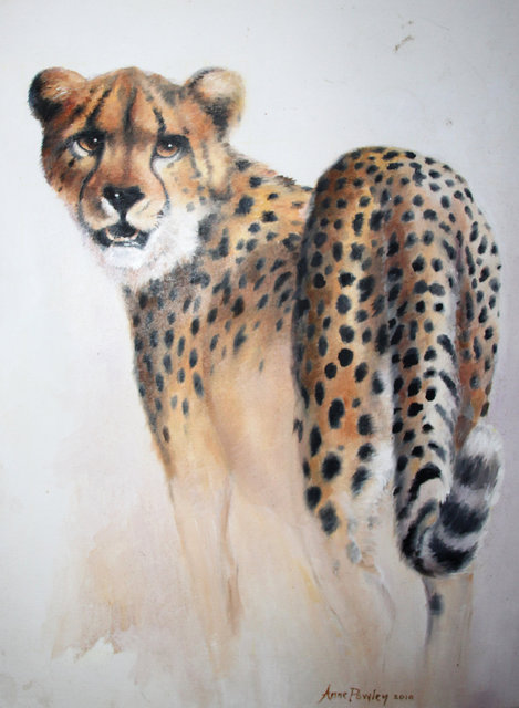 Cheetah 2010.jpg