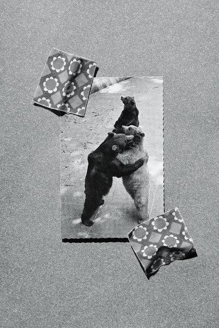 bears_2015.jpg