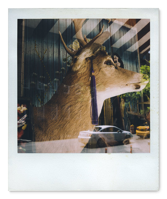 026_Polaroid SX70_DSC01928.jpg