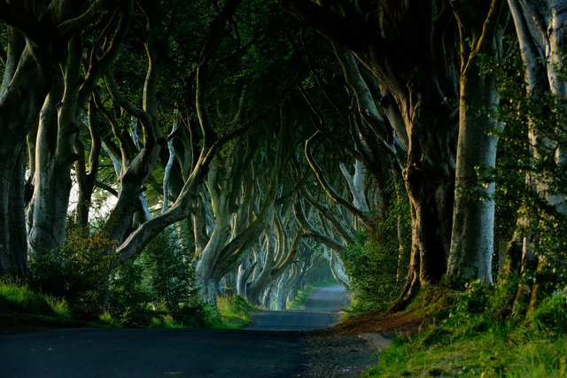 Dark Hedges, Irlande
