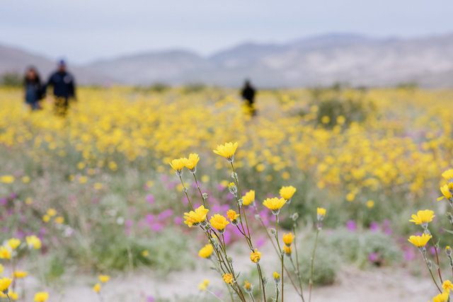JohnFPeters_WEB_SuperBloom_004.JPG