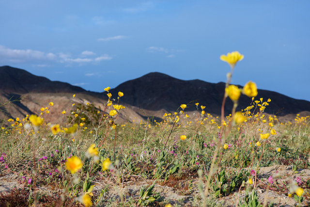 JohnFPeters_WEB_SuperBloom_009.JPG