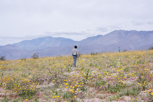 JohnFPeters_WEB_SuperBloom_010.JPG
