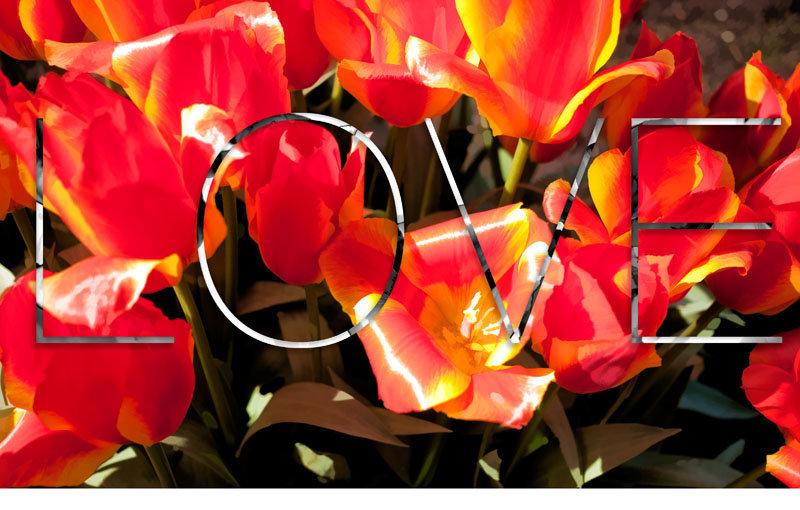 tulip14A.jpg