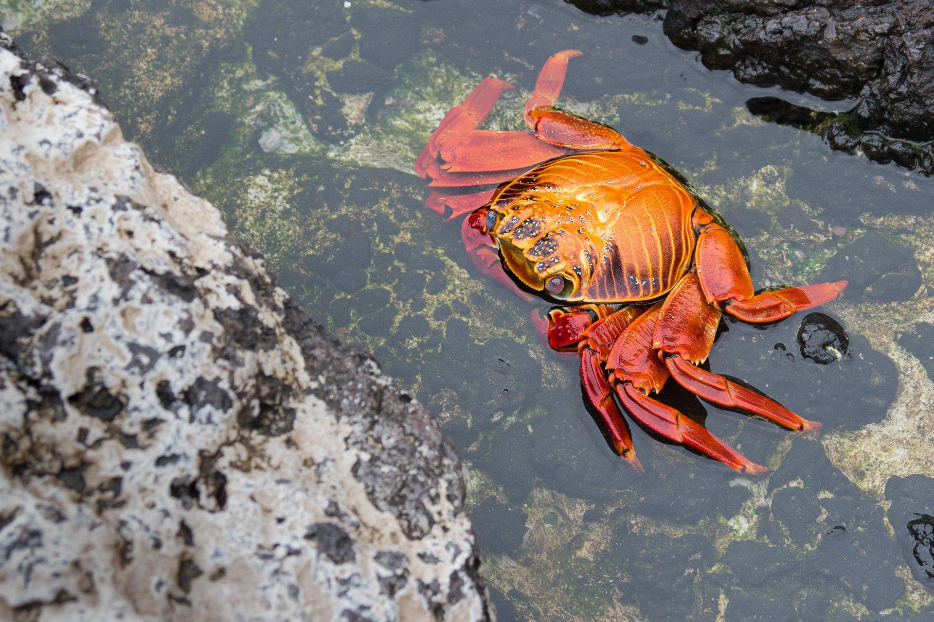 150419_Galapagos-1158.jpg