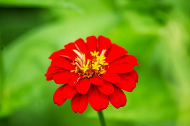 red flower single.jpg