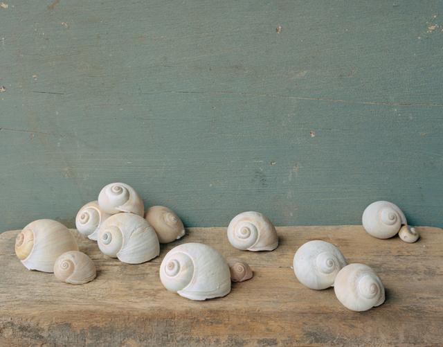 Moon Snails, c 2007