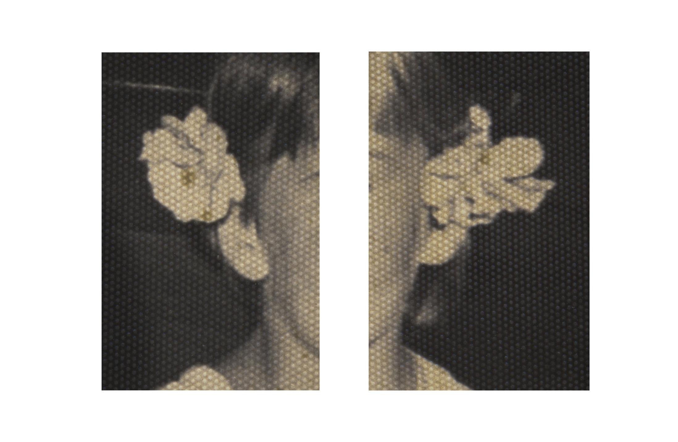 4_JdB_Flowers in hair.jpg