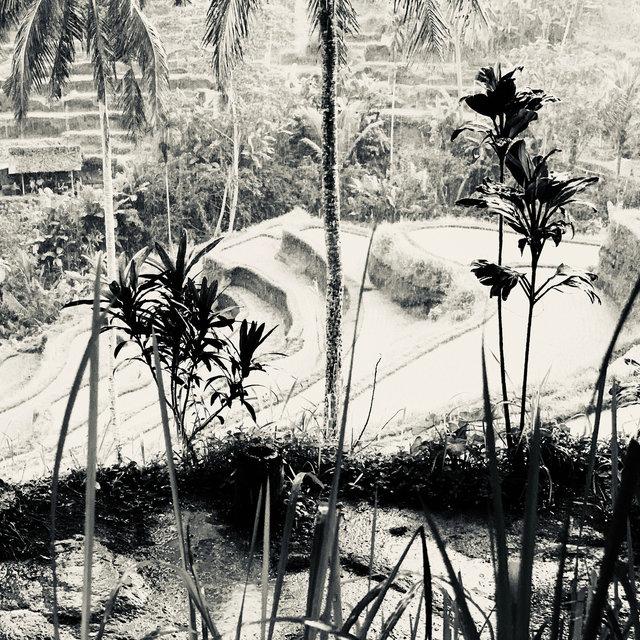 Tegallalang, Bali