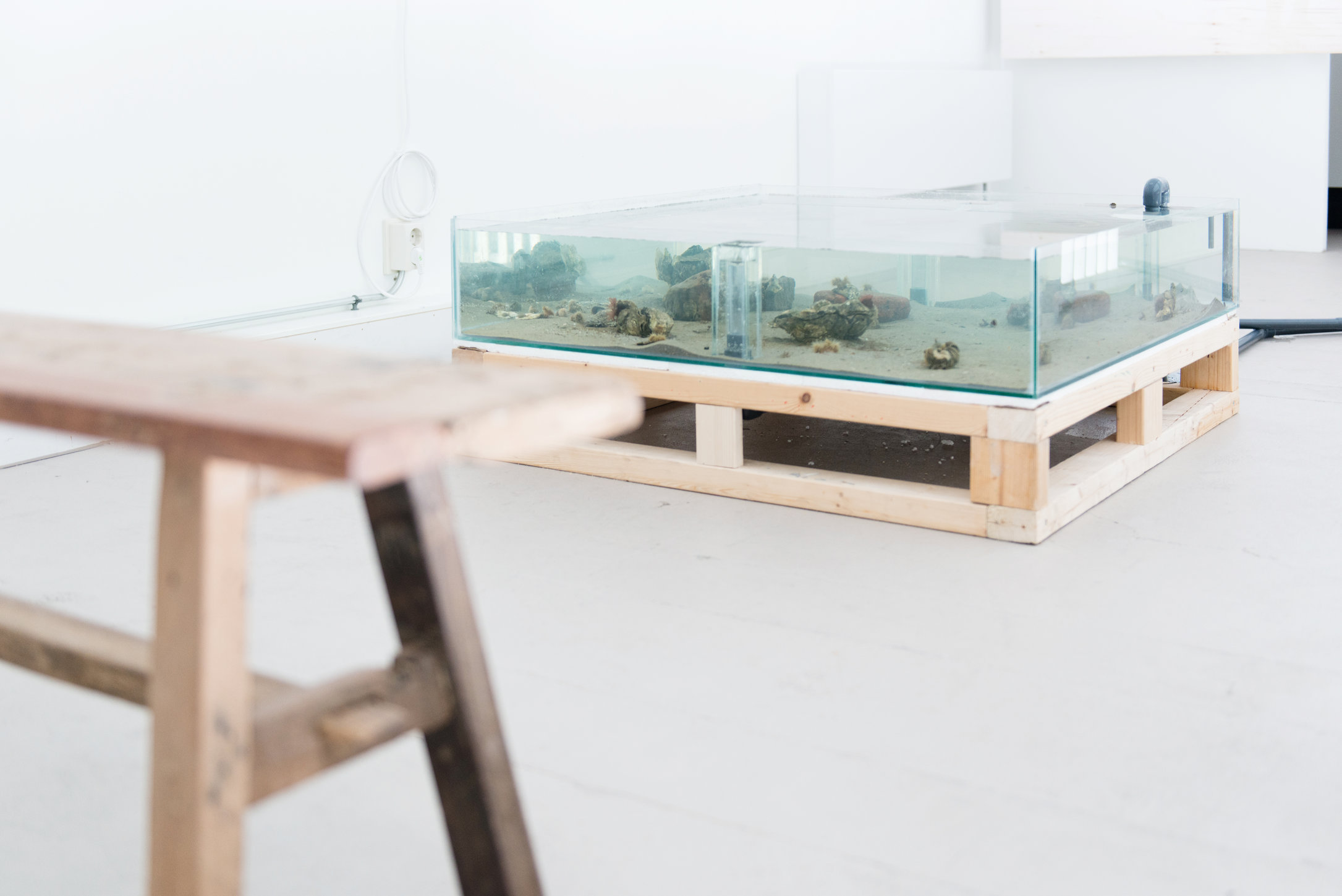 Eamonn Harnett, installation view A Tale of a Tub. Photo: Fabian Landewee