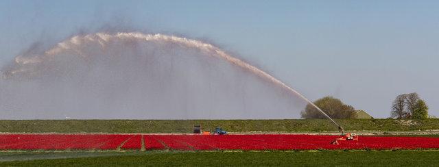 Bulbfields needing water