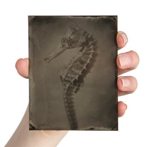 Hippocampus #38